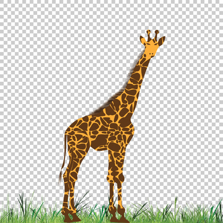 Giraffe vector animal illustration for t-shirt. Sketch tattoo design. Ilustrace