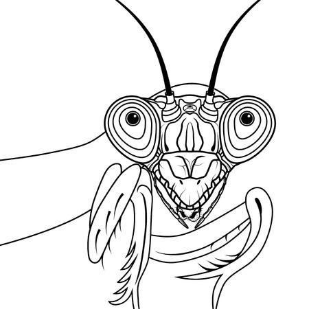 Portrait of green praying mantis vector illustration tattoo t-shirt design symbol for mascot or emblem design, logo sketch design. Zdjęcie Seryjne - 122898665