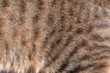 Spotted tabby cat fur coat. Texture detail close up. Stok Fotoğraf - 129960275