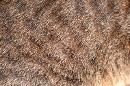 Spotted tabby cat coat fur. Texture detail close up. Stok Fotoğraf - 129959775