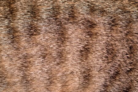 Spotted tabby cat fur coat. Texture detail close up. Stok Fotoğraf