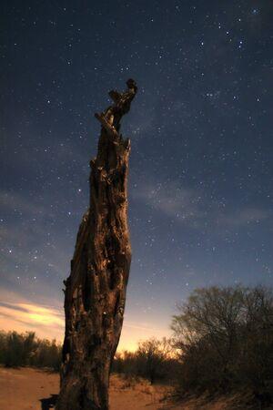 Dead tree under a starry sky on the desert sands.