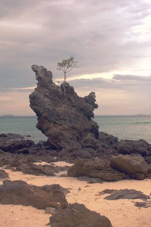 Lone tree growing atop a rock on the beach of Phuket, Thailand.