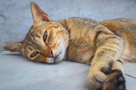 Sleepy-looking stray tabby cat lying on the floor, looking at the camera.