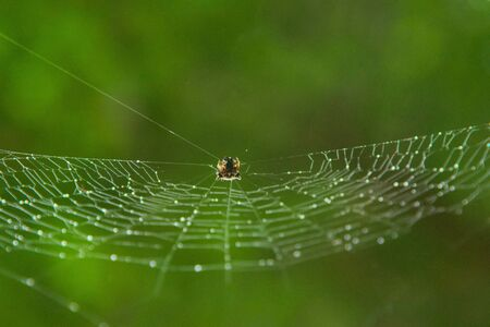 Tiny spider hanging from its web with glistening droplets on it on a rainy day. Extreme close up macro.