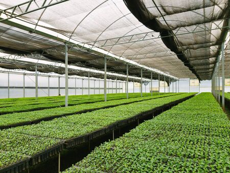 view of large yerba mate plantation under a big greenhouse in argentina 免版税图像