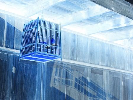 iron barred: birdcage