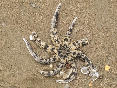 karkas: Karkas van zeester op het zand