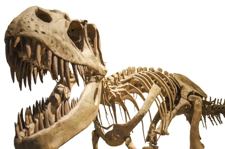 Tyrannosaurus skeleton over white isolated background photo