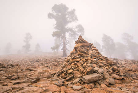 scenary: Foggy scenary in Vilaflor mountain, Tenerife, Canary island, Spain.