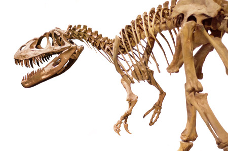 museums: Dinosaur skeleton over white isolated background Stock Photo