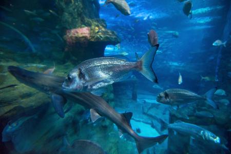 seawater: Fishes swimming in large seawater aquarium