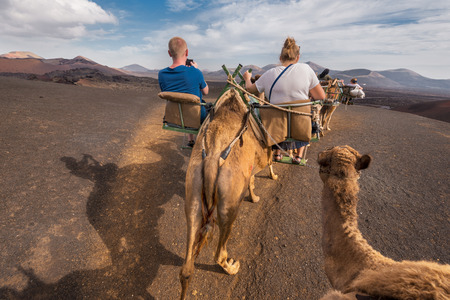 Unidentifiable tourist riding Camels in volcanic landscape in Timanfaya national park, Lanzarote, Canary islands, Spain.