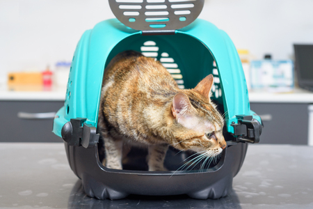 Cat in kennel at veterinary clinic Stock Photo