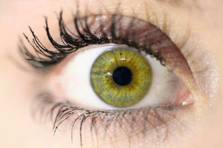 Female eye close-up. Macro. Perfect makeup and eyebrows. Beautiful green eyes.