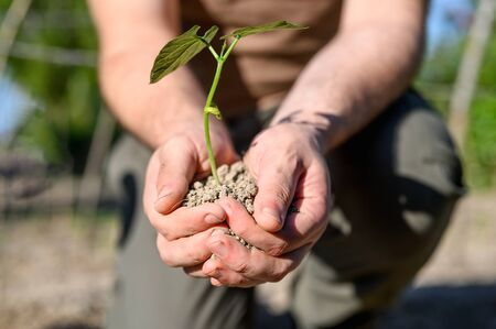 Man hands, holding seed tree for planting into soil.