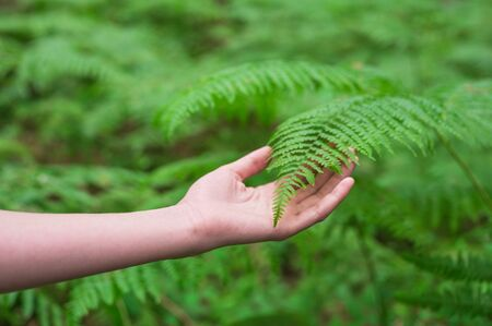 Female hand, with long graceful fingers gently touches the plant, leaves of fern. Close-up shot of unrecognizable person. Stock Photo - 150509826
