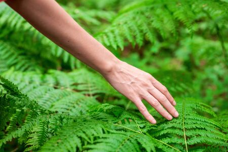 Female hand, with long graceful fingers gently touches the plant, leaves of fern. Close-up shot of unrecognizable person. Stock Photo - 150508421