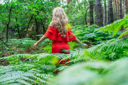 Back view of a Beautiful blonde girl in a chic red dress touching a fern in the fairy forest. Atmosphere fantastic.