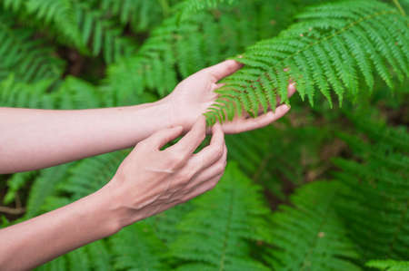 Female hand, with long graceful fingers gently touches the plant, leaves of fern. Close-up shot of unrecognizable person. Stock Photo
