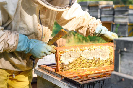 Beekeeper on apiary. Beekeeper is working with bees and beehives on the apiary. Close-up view.
