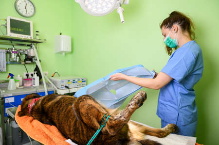 Image of dog on the operating table and doctor in a veterinary clinic Zdjęcie Seryjne
