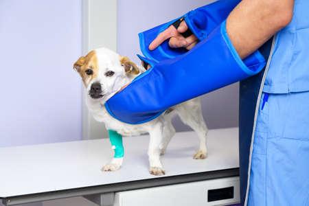 Doctor examining dog in x-ray room.