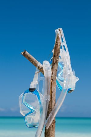 Pair of diving masks hanging on a branch at the beach Stock Photo
