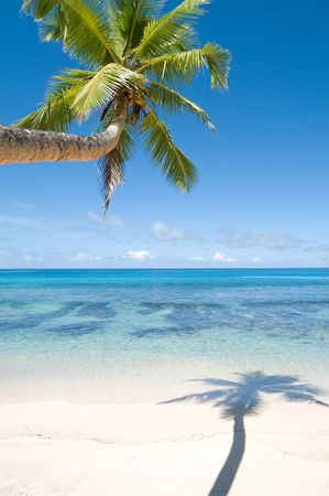 Palm tree over wet beach with shadow Stock Photo