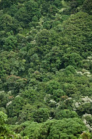 Very dense jungle on hillside  Stock Photo