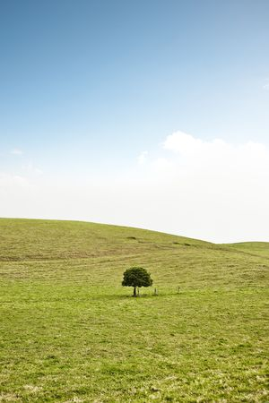 Single solitary tree on green hill