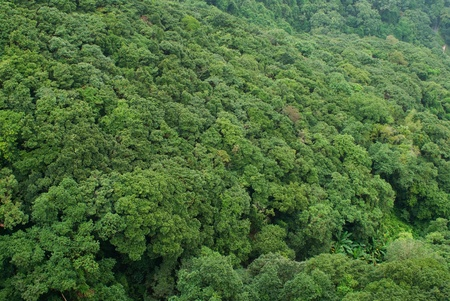 impervious: Full frame of green tropical forrest