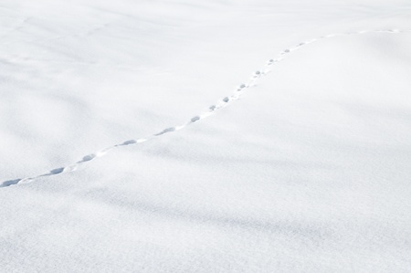 Row of footsteps in snow to symbolize advancement and progress