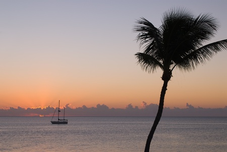 Silhouette of single palm tree in front of sunset Stock Photo