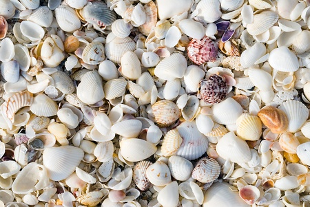 Close up of a big pile of shells