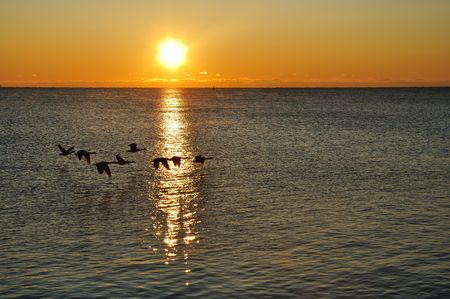canada goose: Silhouettes of Canadian Geese Flying over a Lake at Sunrise