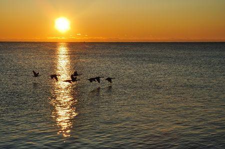 선 라이즈에서 호수 위로 날아 다니는 기러기의 실루엣