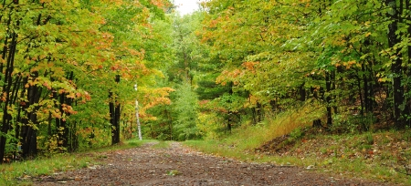 A Road Through the Woods in Autumn photo