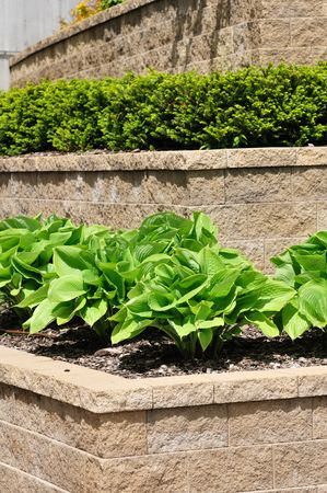 Tiered Retaining Wall with Hosta and Shrubs photo