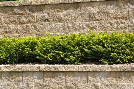 상록 관목이있는 계층 형 옹벽