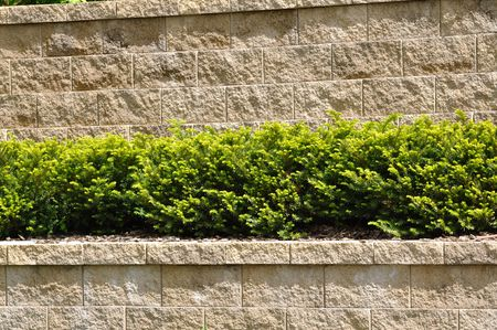 textures: Tiered Retaining Wall with Evergreen Shrubs Stock Photo