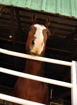 Unique View of Horse on a Stable