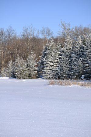 雪原と霜覆われたトウヒ木の風光明媚なビュー