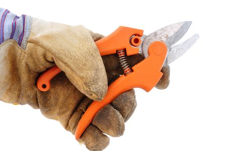 pruning shears: Holding Pruning Shears Using Leather Work Glove Isolated on White