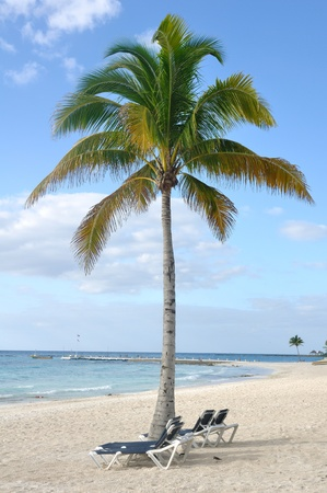 Beach Chairs under Palm Tree on Tropical Beach by the Ocean