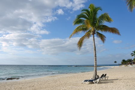 Beach Chairs under Palm Tree on Tropical Beach by the Ocean photo