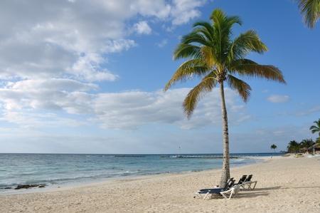 Strandstoelen onder Palm Tree op Tropical Beach door de Oceaan Stockfoto