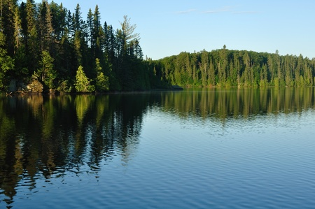 Reflections on the Coniferous Forest on a Wilderness Lake photo