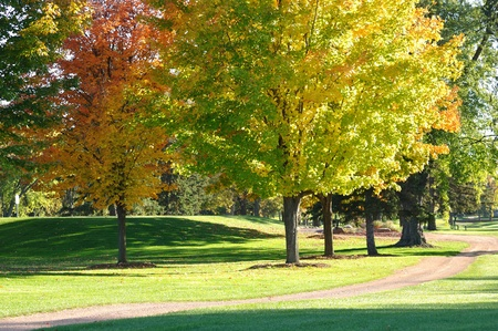 Golf Cart Path and Colorful Leaves on Maple Trees in Autumn photo