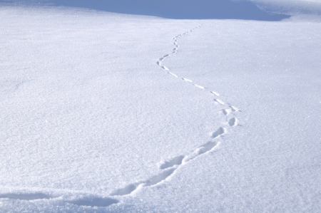 Animal Tracks in Snow Covered Field Stock Photo - 10302158